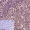 Immunohistochemistry (Formalin/PFA-fixed paraffin-embedded sections) - Anti-CMTM6 antibody [EPR23015-45] - BSA and Azide free (ab264076)