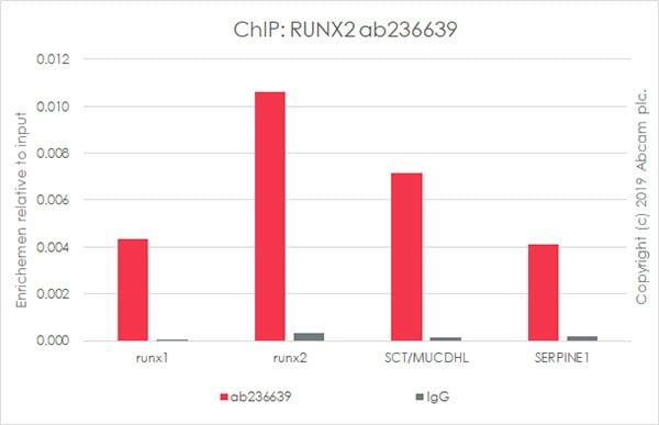 ChIP - Anti-RUNX2 antibody [EPR22858-106] - BSA and Azide free (ab264077)