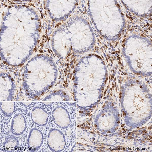 Immunohistochemistry (Formalin/PFA-fixed paraffin-embedded sections) - Anti-beta Actin antibody [mAbcam 8226] - BSA and Azide free (ab264083)