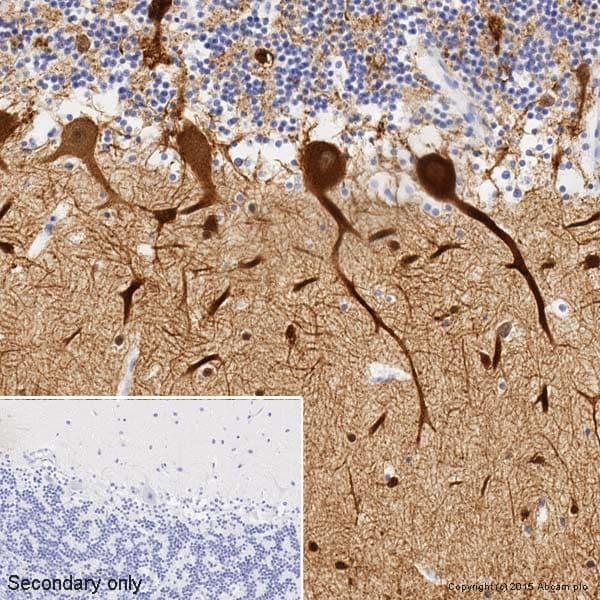 Immunohistochemistry (Formalin/PFA-fixed paraffin-embedded sections) - Anti-beta III Tubulin antibody [2G10] - BSA and Azide free (ab264097)