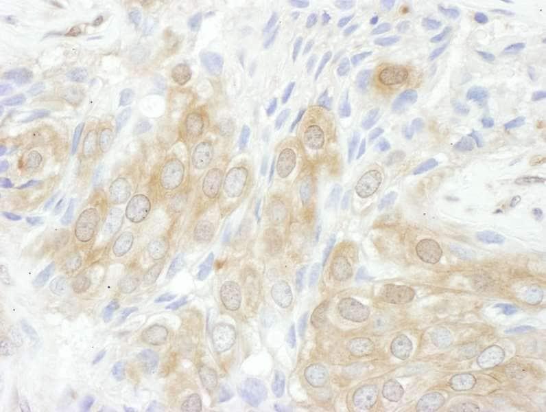 Immunohistochemistry (Formalin/PFA-fixed paraffin-embedded sections) - Anti-14-3-3 tau antibody (ab264319)
