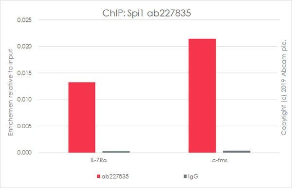 ChIP - Anti-PU.1/Spi1 antibody [EPR22624-20] - BSA and Azide free (ab264473)