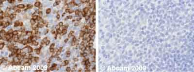 Immunohistochemistry (Formalin/PFA-fixed paraffin-embedded sections) - Anti-NFAT2 antibody [7A6] - ChIP Grade – BSA and Azide free (ab264530)