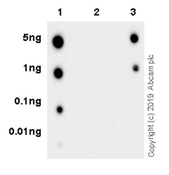 Dot Blot - Anti-HDAC4 (phospho S246) + HDAC5 (phospho S259) + HDAC7 antibody [EPR22997-46] - BSA and Azide free (ab264560)