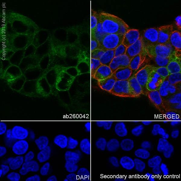 Immunocytochemistry/ Immunofluorescence - Anti-TFPI antibody [EPR22977-133] - BSA and Azide free (ab264568)