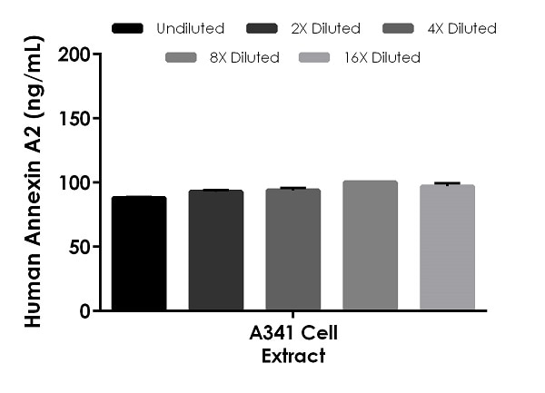 Interpolated concentrations of native Annexin A2 in human A431 cell extract based on a 4.4 µg/mL extract load.