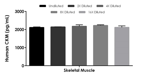 Interpolated concentrations of native CKM in human skeletal muscle tissue sample based on a 500 ng/mL extract load.