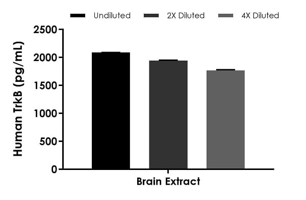 Interpolated concentrations of native TrkB in human brain extract sample based on a 1,000 µg/mL extract load.