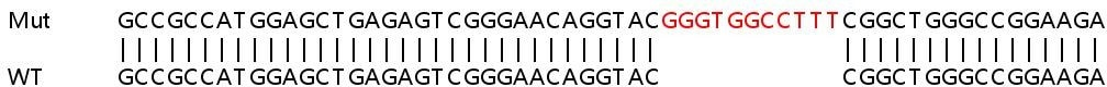 Sanger Sequencing - Human CSNK1D knockout HeLa cell line (ab264667)