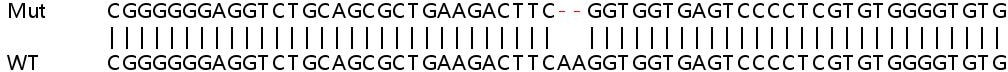 Sanger Sequencing - Human ASIC1 knockout HeLa cell line (ab264699)