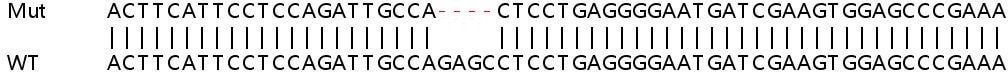 Sanger Sequencing - Human BRSK1 knockout HeLa cell line (ab264705)