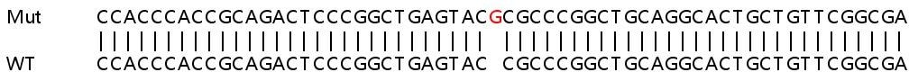 Sanger Sequencing - Human AMH knockout HeLa cell line (ab264728)