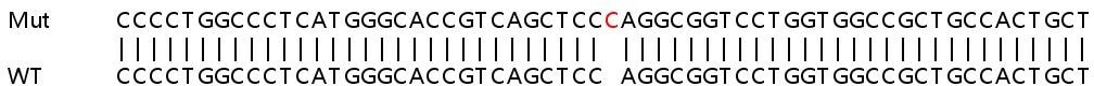 Sanger Sequencing - Human PCSK9 knockout HeLa cell line (ab264775)