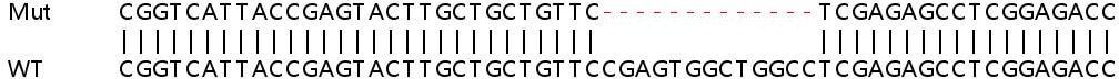 Sanger Sequencing - Human IGF1R knockout HeLa cell line (ab264801)