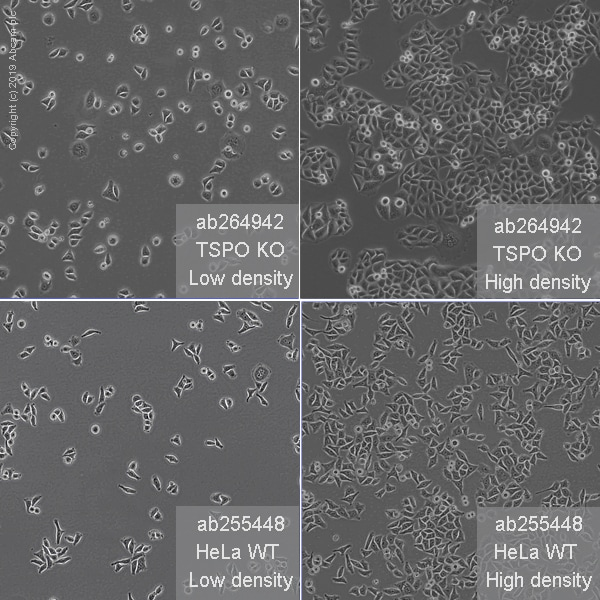 Other - Human TSPO knockout HeLa cell line (ab264942)
