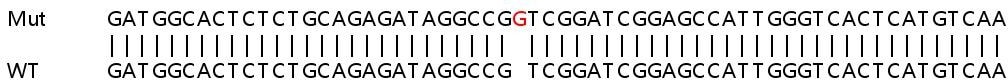 Sanger Sequencing - Human CLTCL1 knockout HeLa cell line (ab264969)