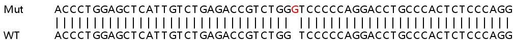Sanger Sequencing - Human CLU knockout HeLa cell line (ab264971)