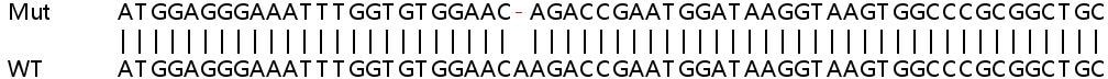 Sanger Sequencing - Human CTTN knockout HeLa cell line (ab265011)