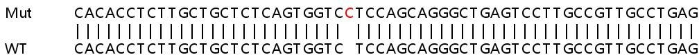 Sanger Sequencing - Human PER1 knockout HeLa cell line (ab265028)