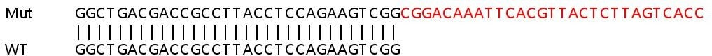 Sanger Sequencing - Human APTX knockout HeLa cell line (ab265118)
