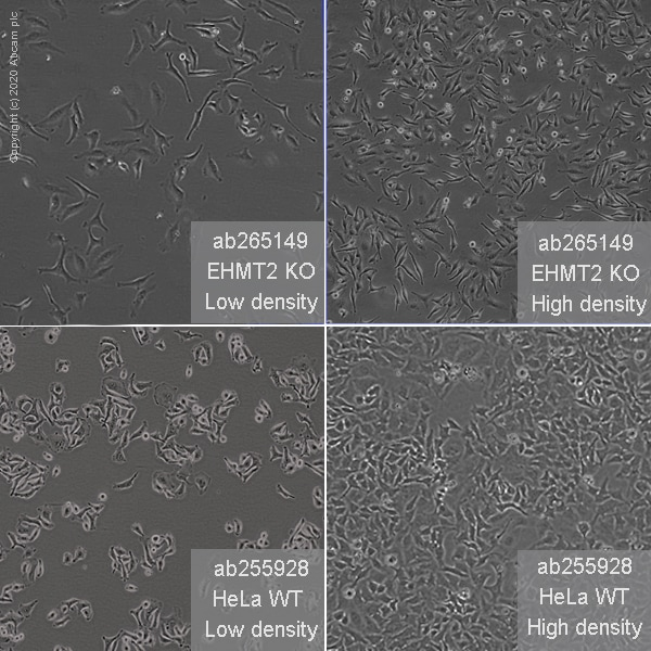 Other - Human EHMT2 knockout HeLa cell line (ab265149)