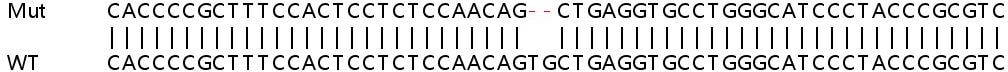 Sanger Sequencing - Human TGM2 knockout HeLa cell line (ab265245)