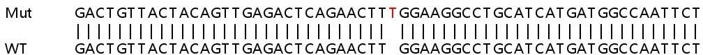 Sanger Sequencing - Human FAS knockout HeLa cell line (ab265260)