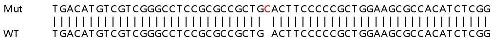 Sanger Sequencing - Human ATG16L1 knockout HeLa cell line (ab265263)