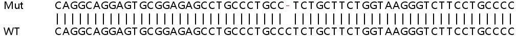 Sanger Sequencing - Human BAK1 knockout HeLa cell line (ab265277)