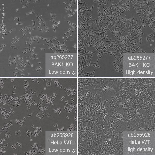 Other - Human BAK1 knockout HeLa cell line (ab265277)