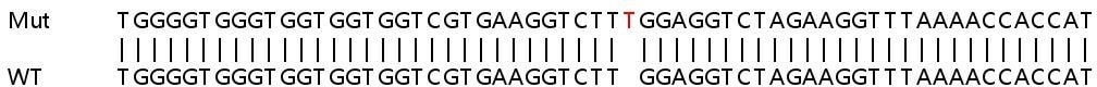 Sanger Sequencing - Human ITCH knockout HeLa cell line (ab265338)