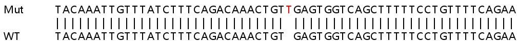 Sanger Sequencing - Human IL21 knockout HeLa cell line (ab265363)