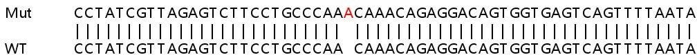 Sanger Sequencing - Human BRAF knockout HeLa cell line (ab265373)