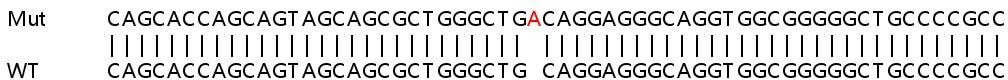 Sanger Sequencing - Human GNS knockout HeLa cell line (ab265495)