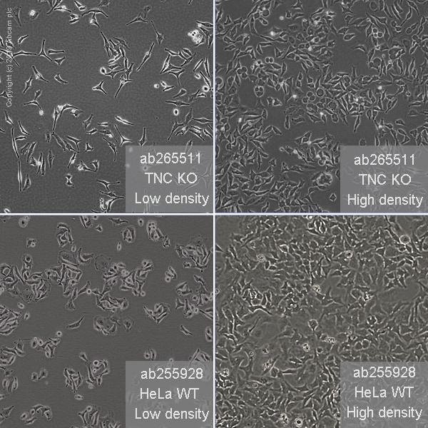 Other - Human TNC knockout HeLa cell line (ab265511)