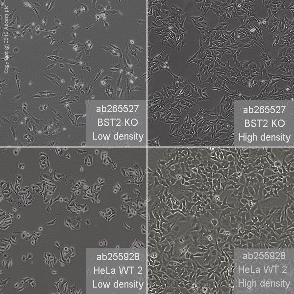 Other - Human BST2 knockout HeLa cell line (ab265527)