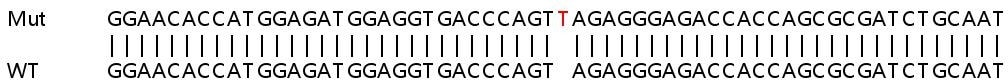 Sanger Sequencing - Human SLC35C1 knockout HeLa cell line (ab265537)