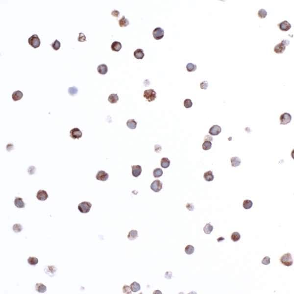 Immunocytochemistry/ Immunofluorescence - Anti-CD74 antibody [LN2] (ab265584)