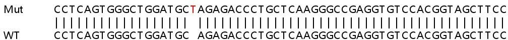 Sanger Sequencing - Human PTPN6 knockout HeLa cell line (ab265629)