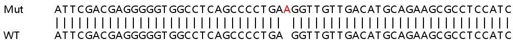 Sanger Sequencing - Human ASCC2 knockout HeLa cell line (ab265781)