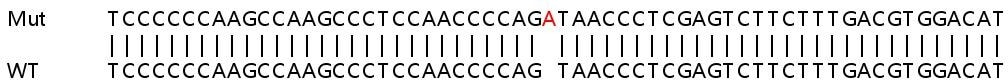 Sanger Sequencing - Human PPID knockout HeLa cell line (ab265788)