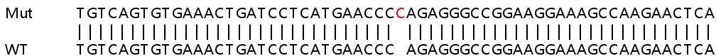 Sanger Sequencing - Human PTPRM knockout HeLa cell line (ab265846)
