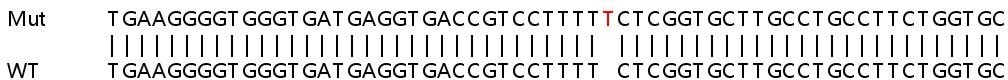 Sanger Sequencing - Human TMUB1 knockout HeLa cell line (ab265852)