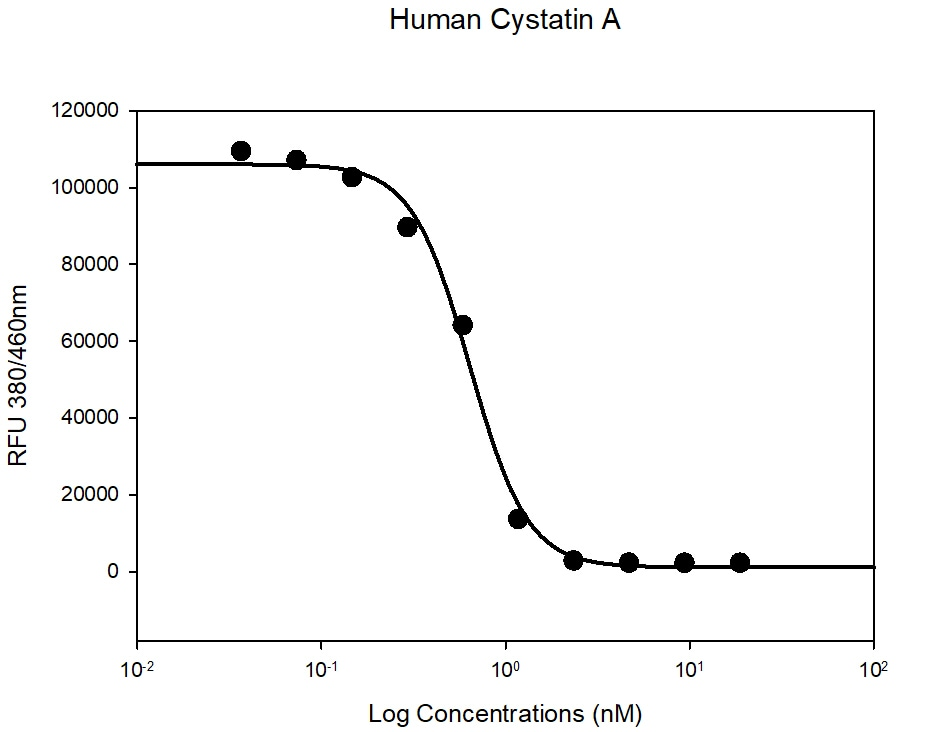 Functional Studies - Recombinant human Cystatin A protein (Active) (ab265857)