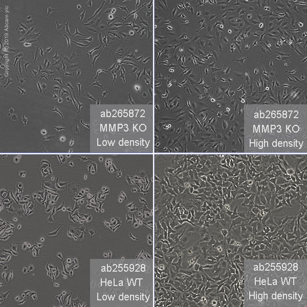 Other - Human MMP3 knockout HeLa cell line (ab265872)