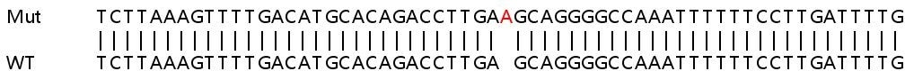Sanger Sequencing - Human FAM49B knockout HeLa cell line (ab265906)
