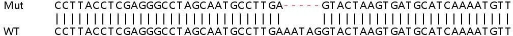 Sanger Sequencing - Human ELOVL5 knockout HeLa cell line (ab265942)