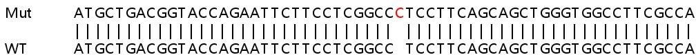 Sanger Sequencing - Human NDUFB9 knockout HeLa cell line (ab265946)