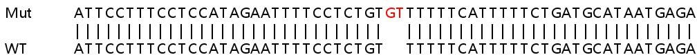 Sanger Sequencing - Human SENP5 knockout HeLa cell line (ab265971)
