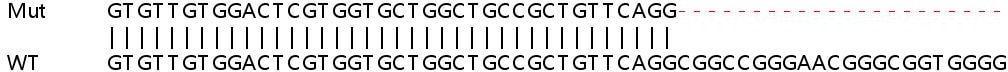 Sanger Sequencing - Human ERI3 knockout HeLa cell line (ab265999)